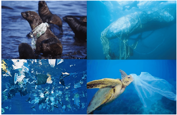 Plastic Pollution on Marine environment